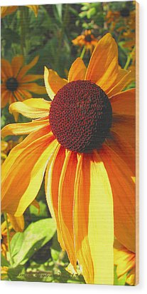 Wood Print featuring the photograph Black-eyed Susan In Your Face by Brooks Garten Hauschild