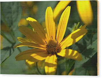 Wood Print featuring the photograph Black Eyed Susan by Cathy Shiflett