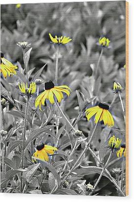 Black-eyed Susan Field Wood Print by Carolyn Marshall