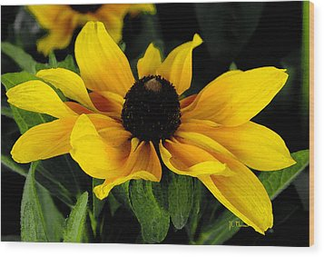 Black Eyed Susan  Wood Print by James C Thomas