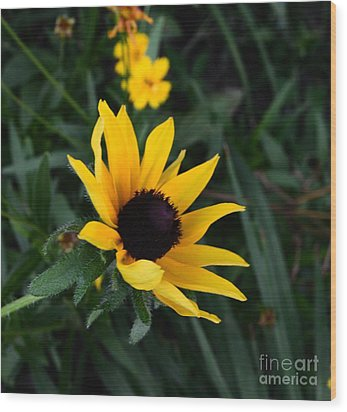 Wood Print featuring the photograph Black-eyed Susan Glows With Cheer by Luther Fine Art