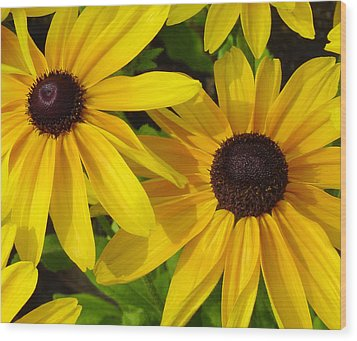 Black-eyed Susans Close Up Wood Print by Suzanne Gaff