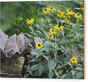 Black-eyed Susans Wood Print