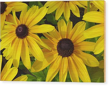 Black Eyed Susans Wood Print by Suzanne Gaff
