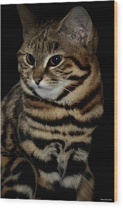 Black-footed Cat Wood Print by Maria Urso