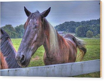 Black Horse At A Fence Wood Print