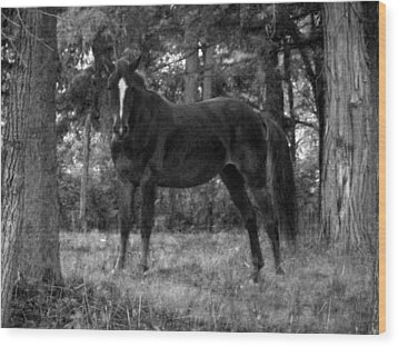 Black Horse Wood Print by Joyce  Wasser