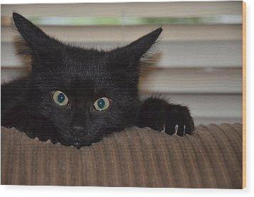 Black Kitten Wood Print