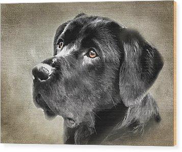Black Lab Portrait Wood Print