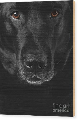 Black Labrador Retriever Wood Print