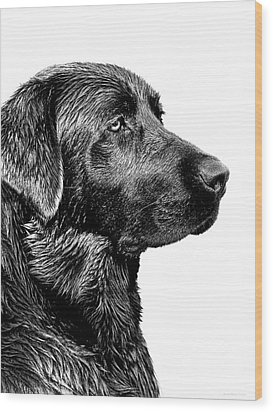 Black Labrador Retriever Dog Monochrome Wood Print by Jennie Marie Schell