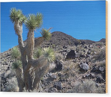 Wood Print featuring the photograph Black Mountain Yucca by Alan Socolik