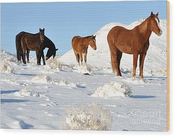 Black N' Brown Mustangs In Snow Wood Print by Vinnie Oakes