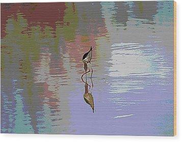 Black Neck Stilt Out In The Pond Wood Print by Tom Janca