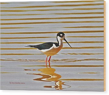 Wood Print featuring the photograph Black Neck Stilt Standing by Tom Janca