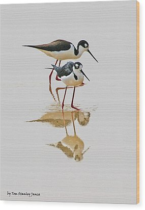 Black Neck Stilts Togeather Wood Print
