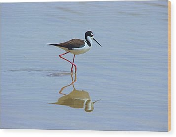 Black Necked Stilt Wood Print by David Rizzo
