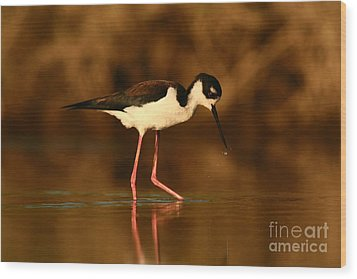 Wood Print featuring the photograph Black-necked Stilt Waterdrops by John F Tsumas