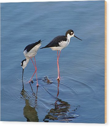 Wood Print featuring the photograph Black-necked Stilts by Bob and Jan Shriner