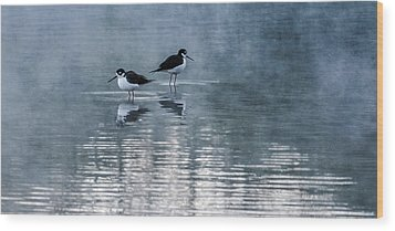 Black-necked Stilts Wood Print by Tam Ryan