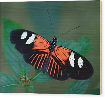 Black Orange And White Wood Print by Karen Stephenson