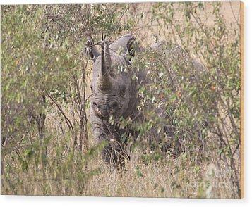 Black Rhino  Wood Print by Chris Scroggins
