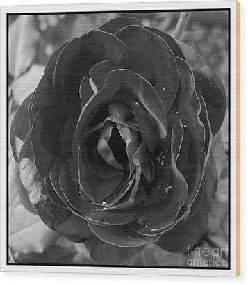 Wood Print featuring the photograph Black Rose by Nina Ficur Feenan