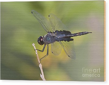 Wood Print featuring the photograph Black Saddlebags by Bryan Keil