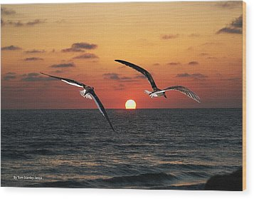 Black Skimmers At Sunset Wood Print by Tom Janca