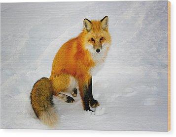 Black Socks Fox Wood Print