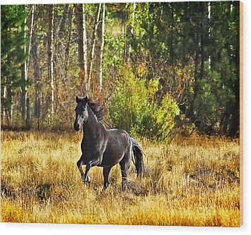 Black Stallion Runs Free Wood Print