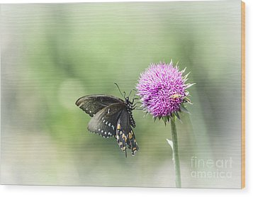 Black Swallowtail Dreaming Wood Print by Debbie Green