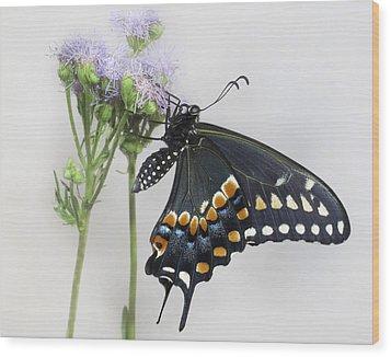 Black Swallowtail II Wood Print by David and Carol Kelly