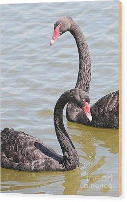 Black Swan Pair Wood Print by Carol Groenen