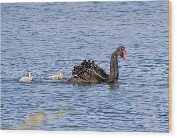 Black Swans Wood Print by Steven Ralser