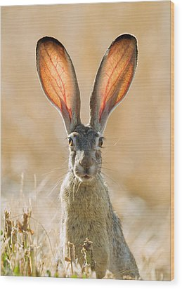 Black-tailed Hare Davis California Wood Print by Doug Herr