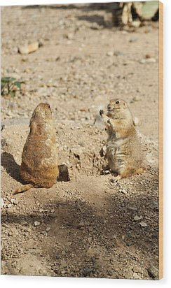 Wood Print featuring the glass art Black Tailed Prairie Dogs by Daniel Hebard