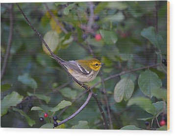 Wood Print featuring the photograph Black-throated Green Warbler by James Petersen