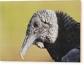 Black Vulture Portrait Wood Print by Katherine White