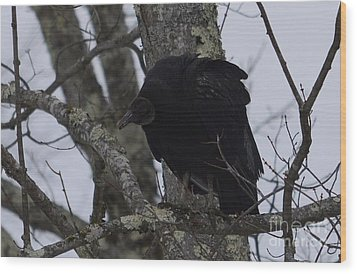 Wood Print featuring the photograph Black Vulture by Randy Bodkins