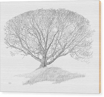 Black Walnut Wood Print