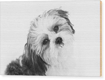 Black  White Puppy Wood Print by Paulina Szajek
