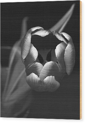 Black White Tulip Wood Print