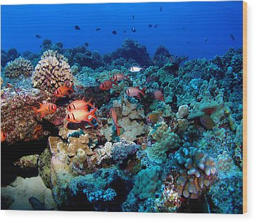 Blackbar Soldier Fish Under A Ledge Wood Print by Ocean Image Photography