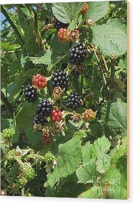 Blackberries Wood Print by Susanne Baumann