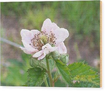 Wood Print featuring the photograph Blackberry Blossom by Belinda Lee