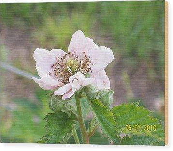 Blackberry Blossom Wood Print by Belinda Lee