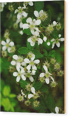 Wood Print featuring the photograph Blackberry Blossoms by Suzanne Powers