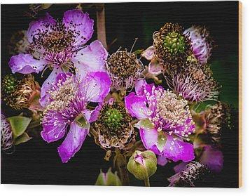 Blackberry Flower Wood Print by Edgar Laureano