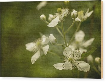 Blackberry Flowers With Textures Wood Print by Wayne Meyer